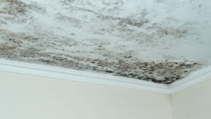 Ceiling Molding Forming